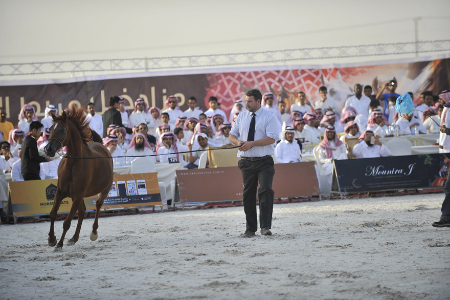 Al Muawd Stud Auction (24)