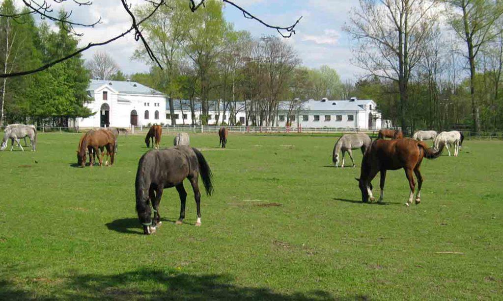 Janow Podlaski Stud Meadow