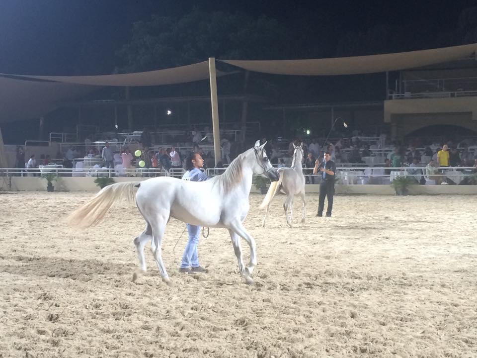 Rabab Championship (1)