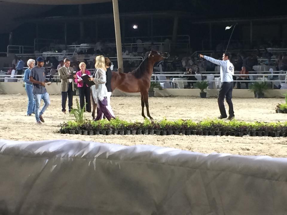 Rabab Championship (3)