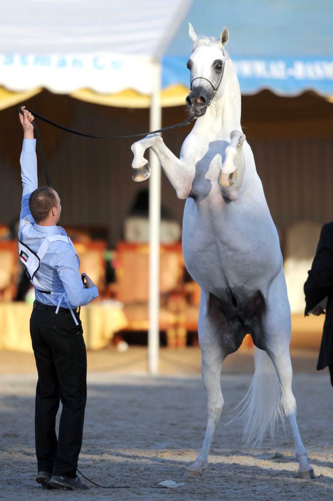 Kuwait Horse Show (1)