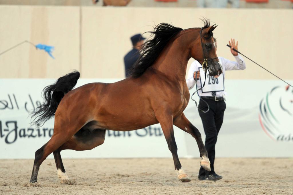 Kuwait Horse Show (2)