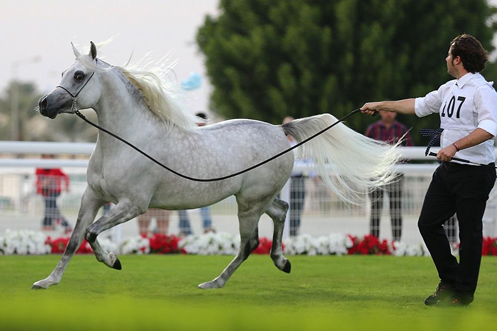 Qatar Horse Show3