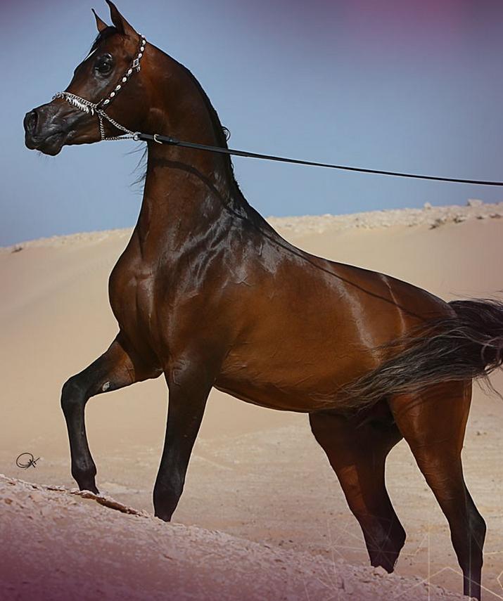 غشام الشقب