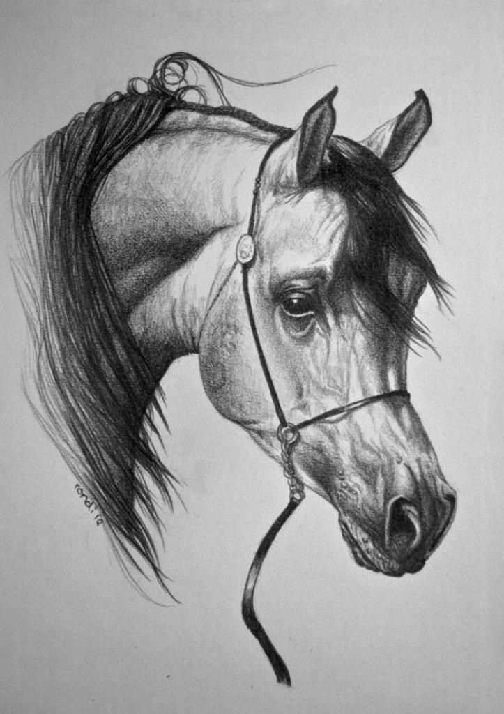 arabian_horse_by_nutlu-d4vfqec