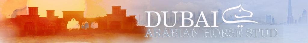 مربط دبي