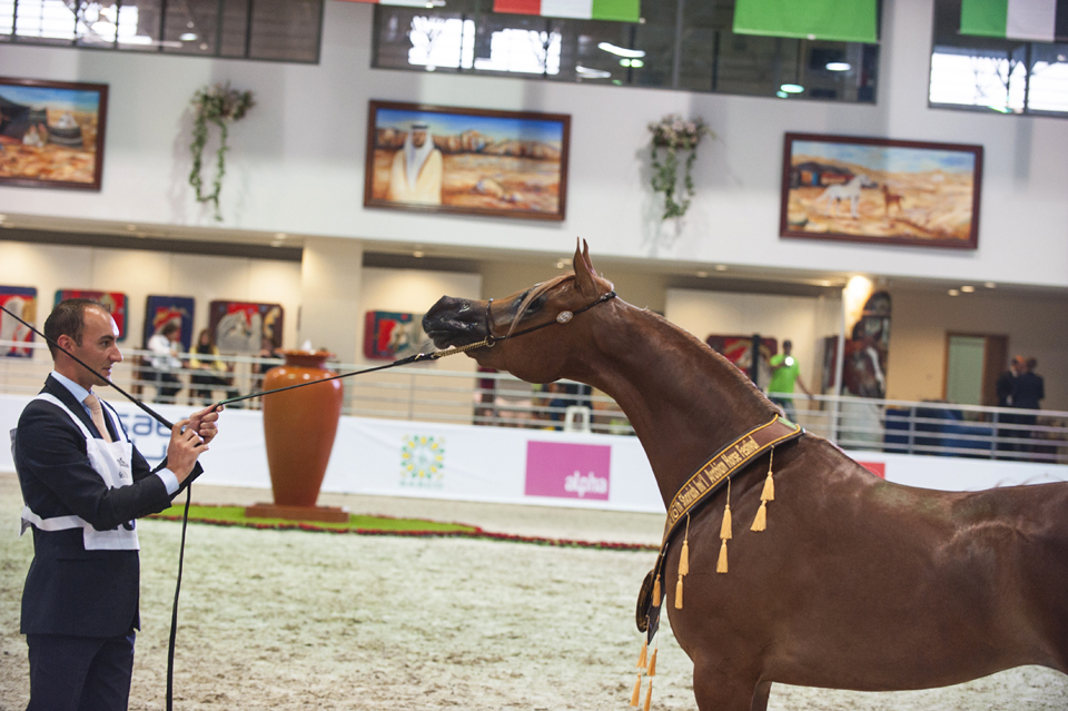 FILLIES 2 YEARS GOLD CHAMPION DELIGHT DEFA
