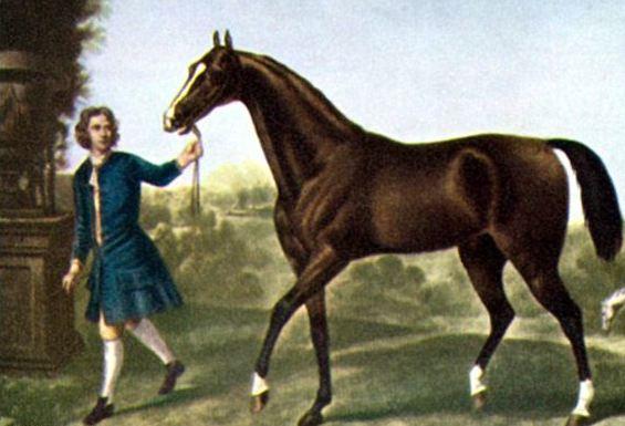 الوحش الجميل: ودارلي العربي – أساس (95٪ من الخيول الأصيلة في بريطانيا)