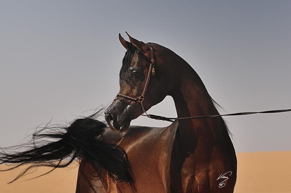 انساب الخيل العربية