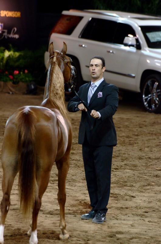 wpid-1014ns-horse-show-brown-horse.jpg
