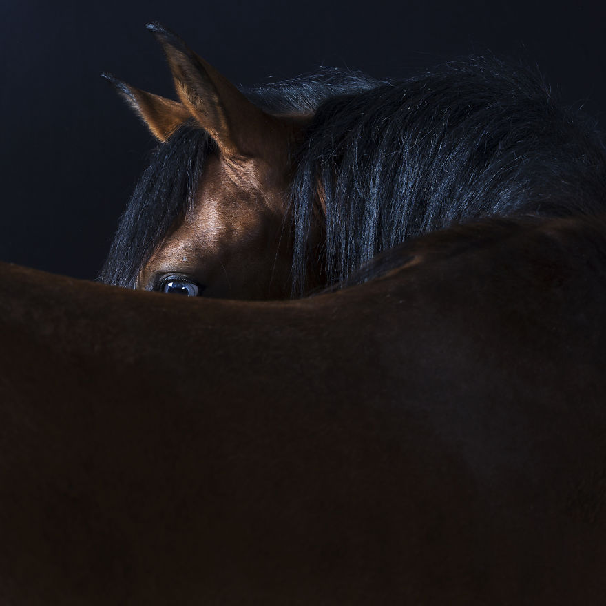 Close-Personal-Portraits-of-Dogs-Cats-and-Horses.4__880