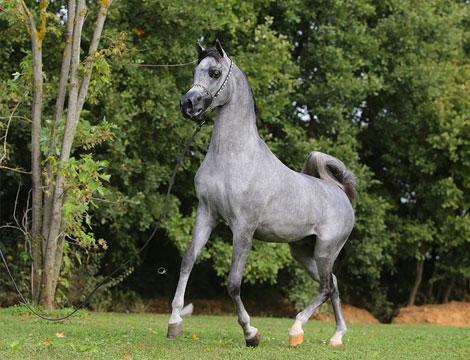 horse_21050_20042015023354