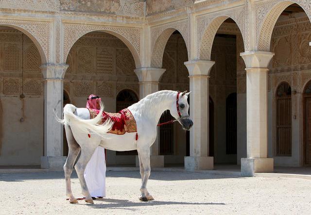 Al-Adeed-3