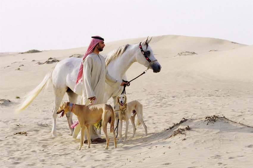 Salukizüchter Hamad Al Ghanem