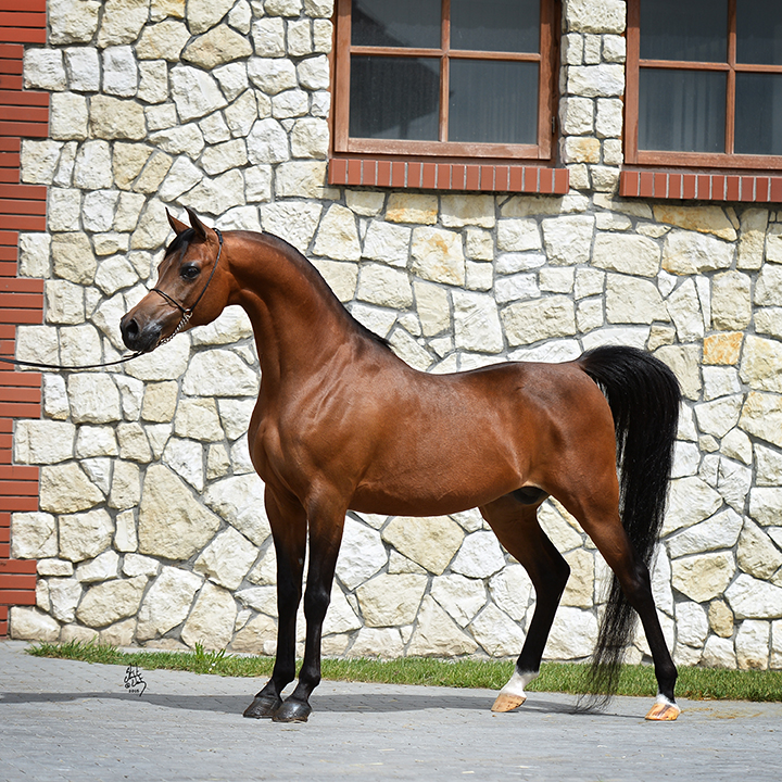 TO VITORIO - 2008 - (DA VALENTINO x SOL NATIQUE (BY SOLSTICE)