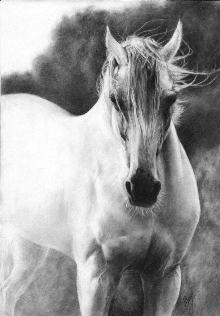white_arabian_horse_by_annzell-d5b2hsn