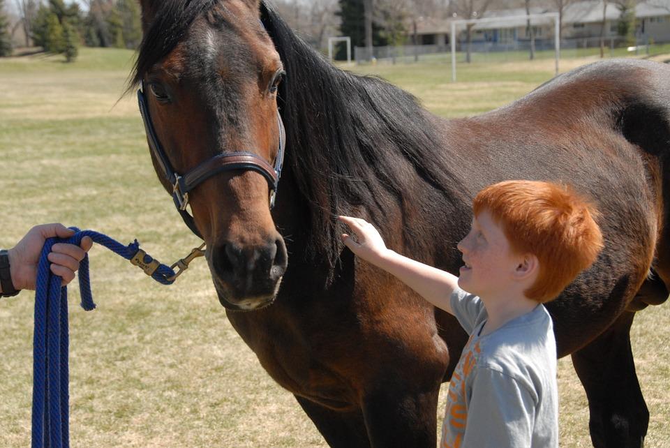 arabian-horse-656756_960_720