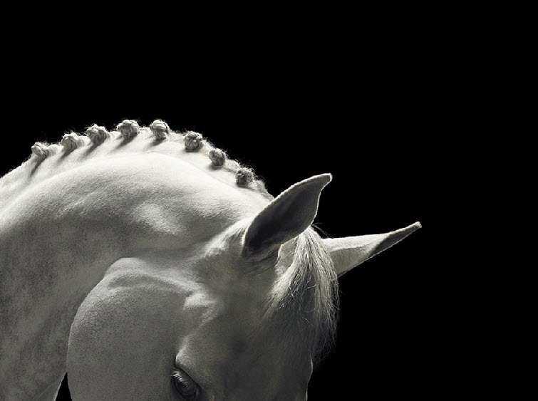 tim-flach-photography-white-horse-braided-mane