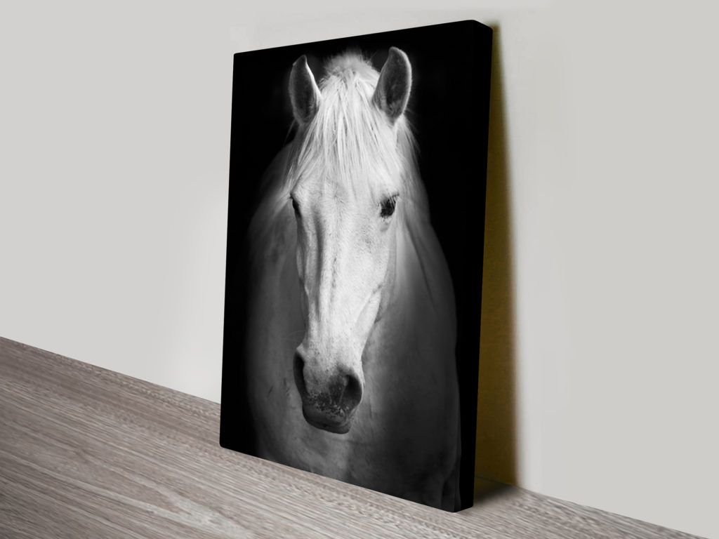 white-horse-black-and-white-photography-canvas-art-print