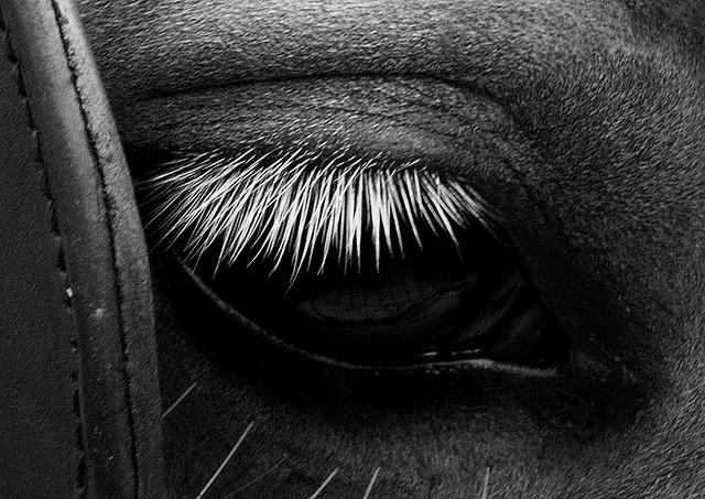 black-white-horse-5