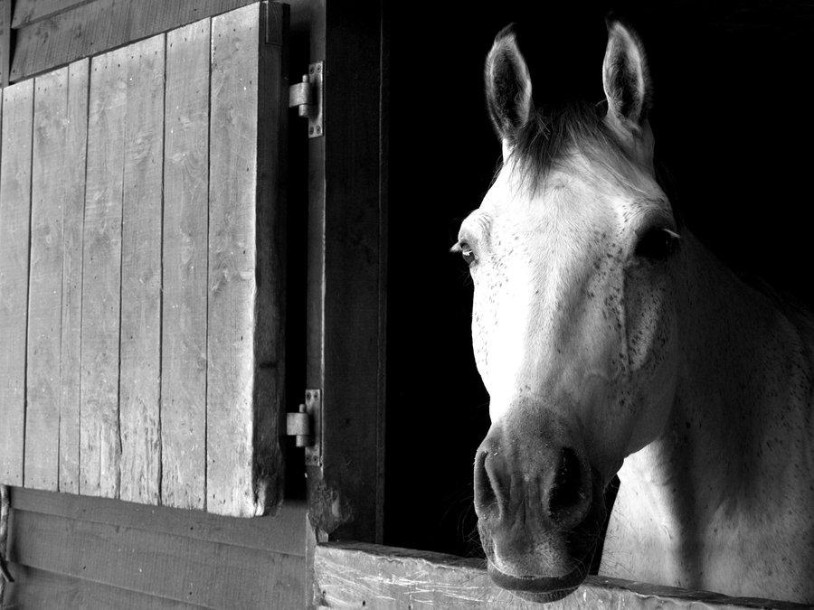 black_and_white_horse_by_natjanaundrup-d5iu0fi