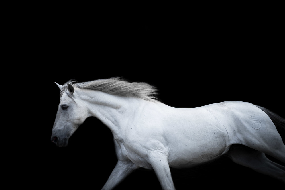 los-angeles-modern-equine-photography-white-horse-running