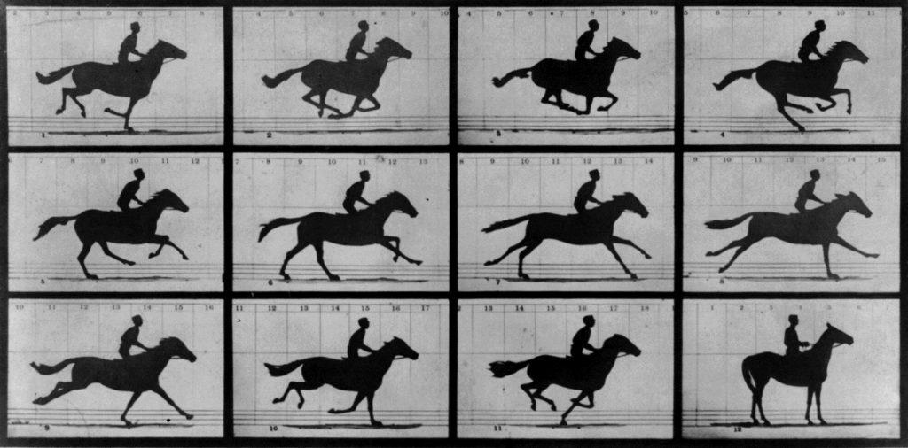 horse-motion
