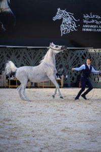 لقطات من مهرجان الخيول العربية في الشرقية