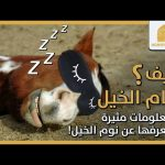 كيف تنام الخيل ؟ ومعلومات مثيرة لا تعرفها عن نوم الخيل !